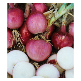 Onion Red 1 lb