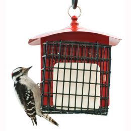 Feathered Friend Double Suet Metal Basket Bird Feeder